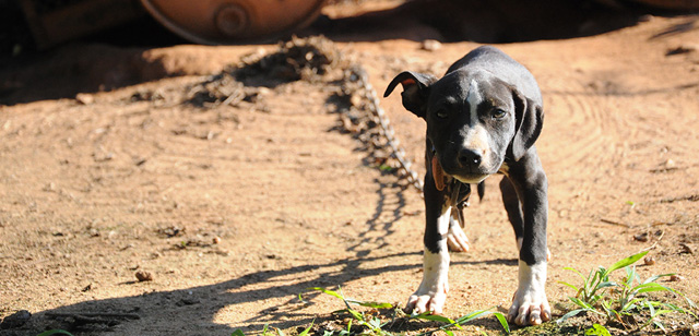 Get Tough On Dog Fighting Campaign